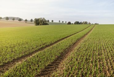preparare il terreno per l'orto