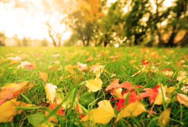 Cura del giardino in autunno